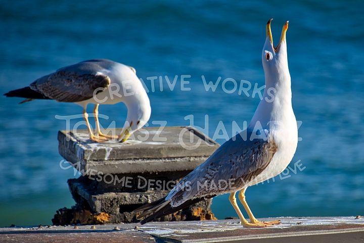 Two Seagulls On Seashore
