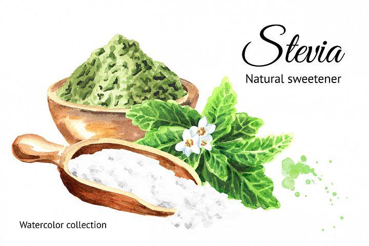Stevia. Watercolor collection
