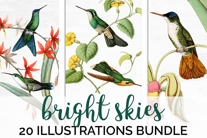 Hummingbird Bundle - Volume One - 20 Count - Humming Birds