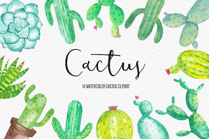 Watercolor Cactus Clipart, Cactus illustration, Succulent