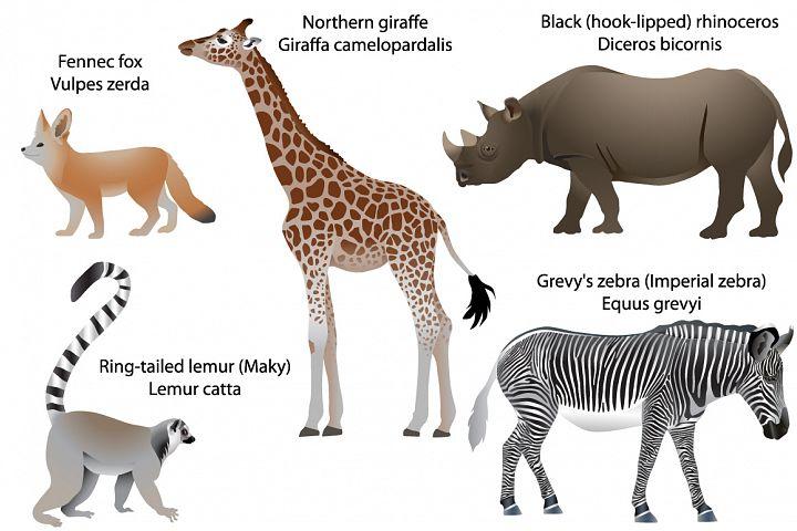 Animals of Africa: giraffe, rhino, zebra, lemur, fennec