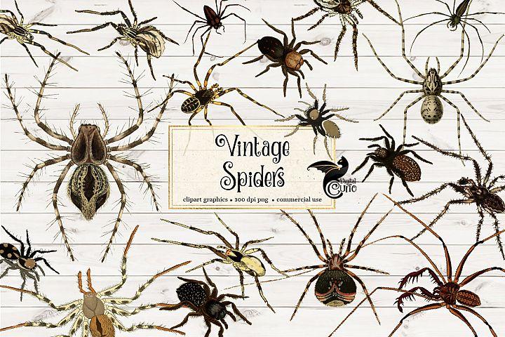 Vintage Spider Clipart