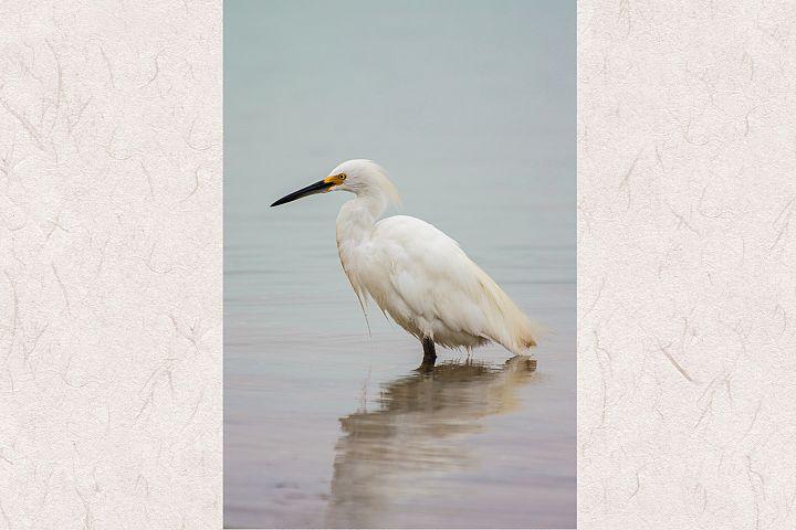 White heron photo 3