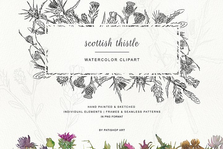Hand Painted & Sketched Thistle Clip Art
