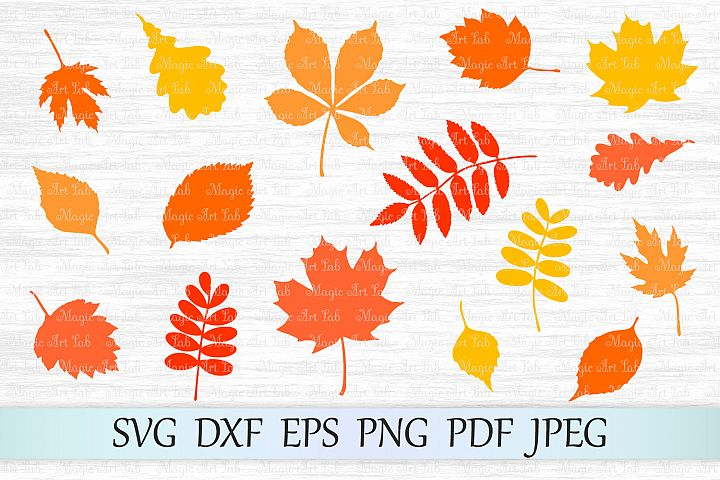 Fall Leaf SVG, Autumn Leaves SVG file, Fall svg, Maple Leaf