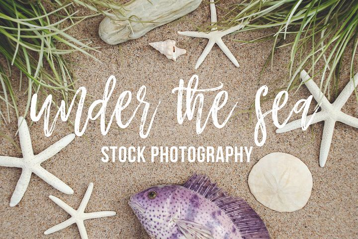 Under the Sea Stock Photography