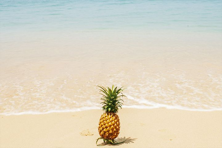 Pineapple of the sea