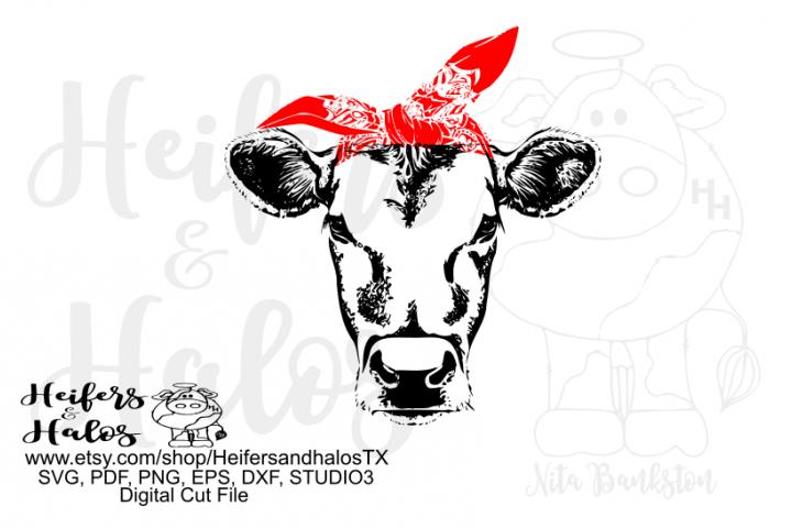 bandana heifer
