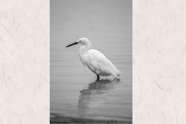 White heron photo 4