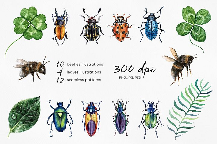 Beetles & Leaves. Watercolor set illustrations example image 2