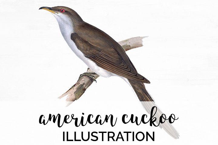 Birds - Vintage American Cuckoo