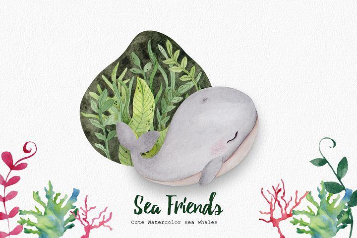 Sea friends. Cute whales