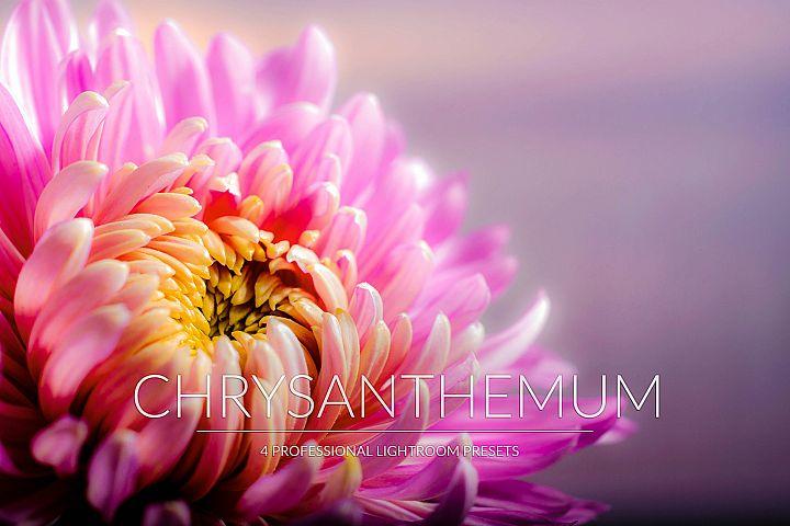 Chrysanthemum Lr Presets