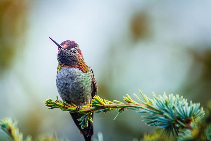 Hummingbird photo 9