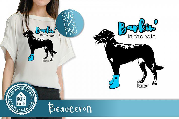 Beauceron, Barking in the rain