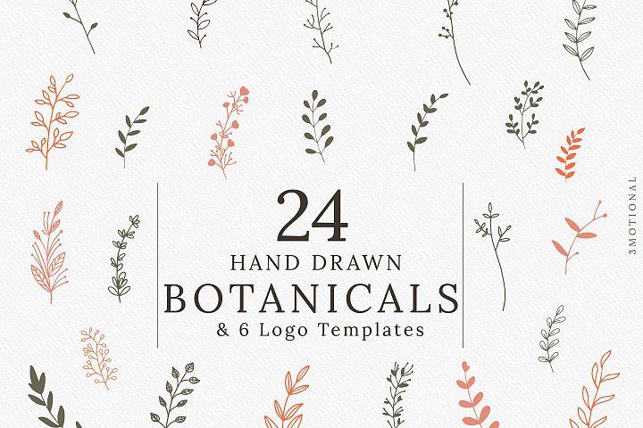 Hand-drawn Botanical Illustrations & Logo Templates