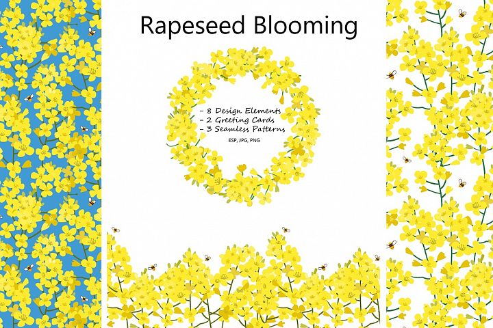 Rapeseed Blooming