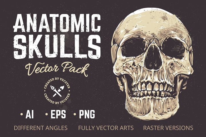 Anatomic Skulls | Vector Pack