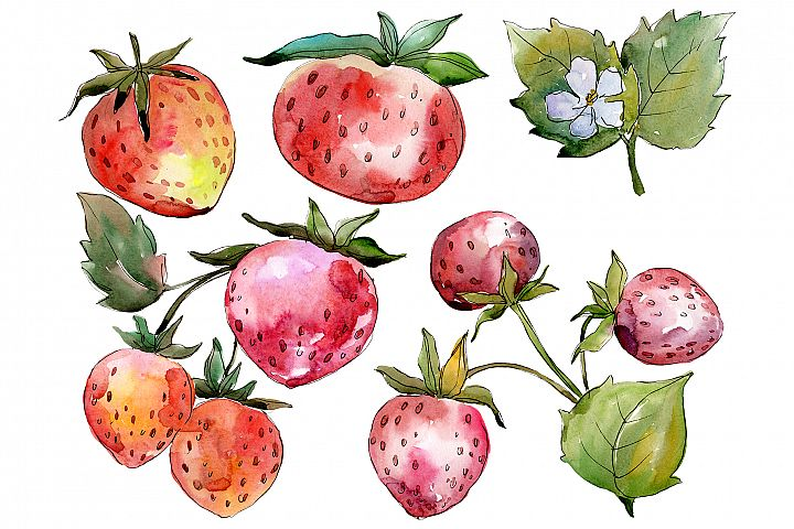 Strawberry Queen Elizabeth watercolor png