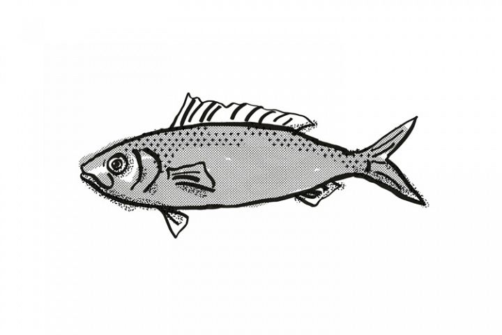 Australian Herring Fish Cartoon Retro Drawing