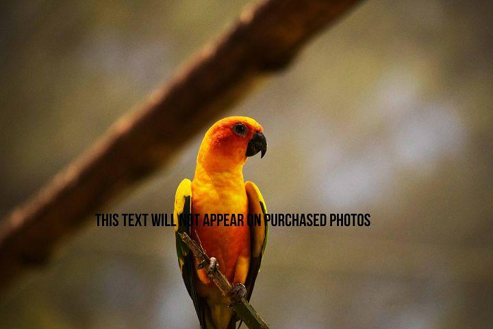 9 Beautiful Birds example 10
