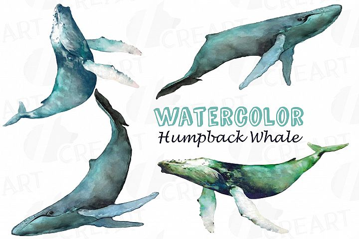 Watercolor humpback whale clip art pack, colorful whales