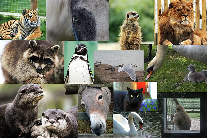 24 Animal Photographs