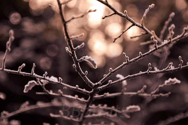 Nature photo, flora photo, twig photo, winter photo