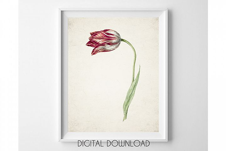 Tulip Print, Plant Wall Art Digital, Red Flower Watercolor