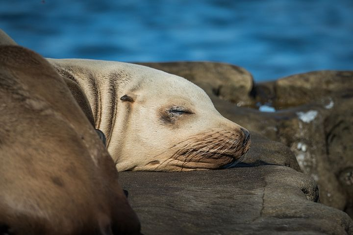 Seal photo 9