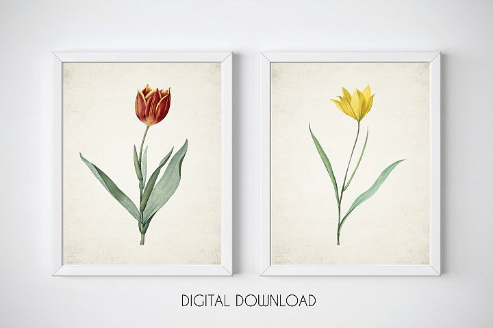 Tulips Prints, Spring Flowers Print, Wall Art Set of 2