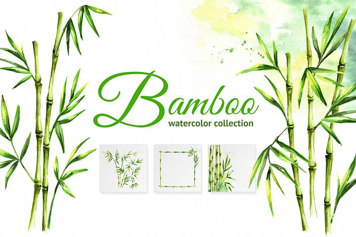 Bamboo. Watercolor collection