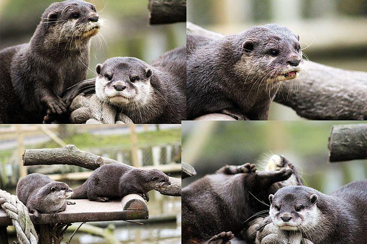 4 Otter Photographs