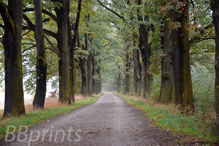 Nature photo, landscape photo, autumn alley photo,