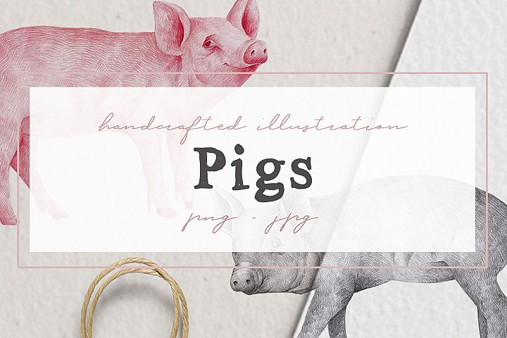 Hand drawn Illustrations Pigs