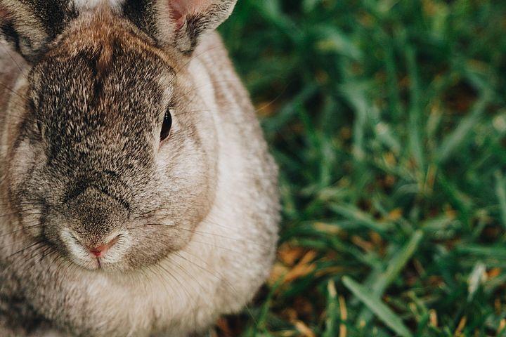 Bunny photo 28