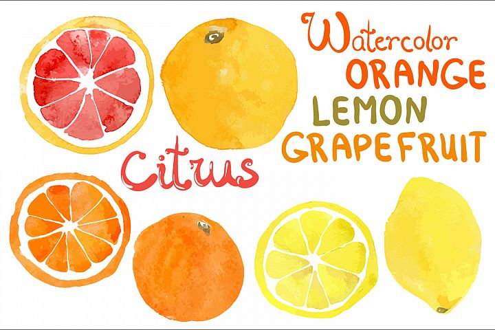 Watercolor vector citrus fruits example 5