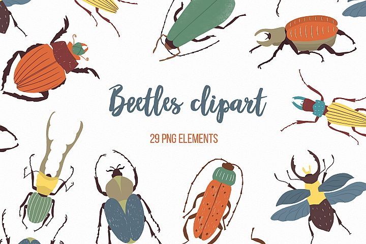 Beetles png clipart, Baby nursery, Insect png elements