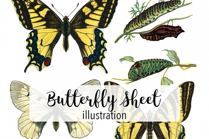 Butterfly - Insects - Vintage Bugs - Butterflies