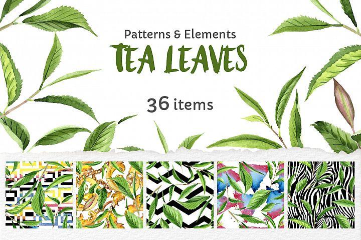 Green Tea Leaves Watercolor png
