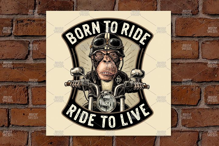 Monkey driving motorcycle rides. Vector vintage engraving