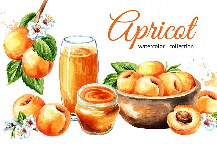 Apricot. Watercolor collection