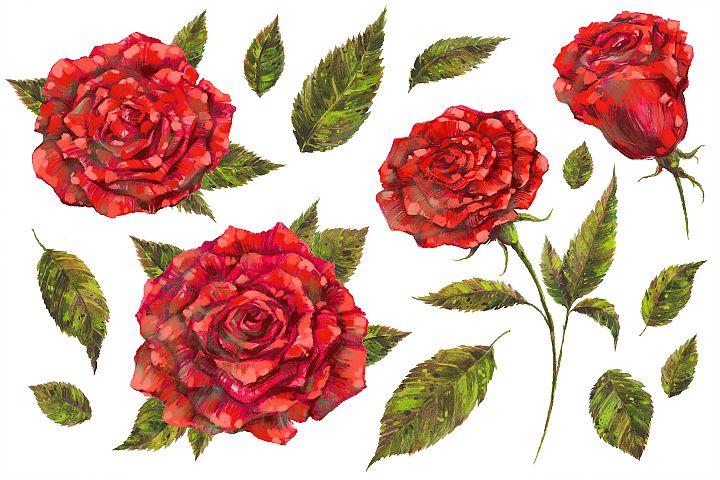 Handpainted Red Roses PNG Set