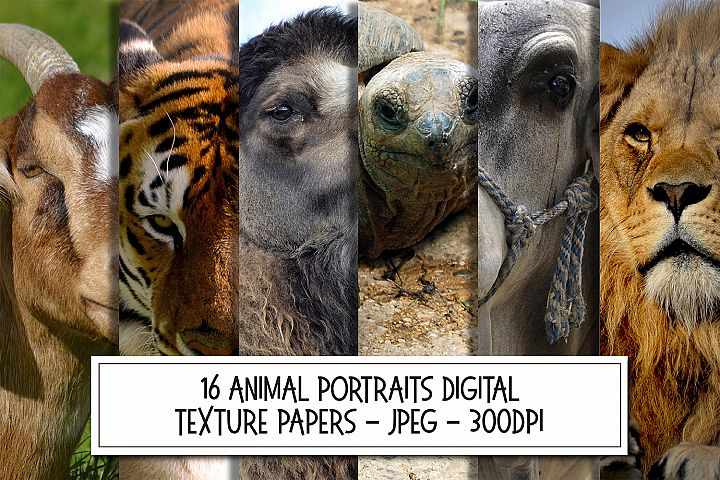 16 Animal Portraits Photographs Bundle