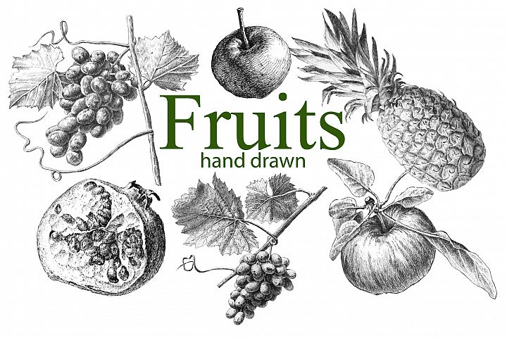 Fruits. Hand drawn.
