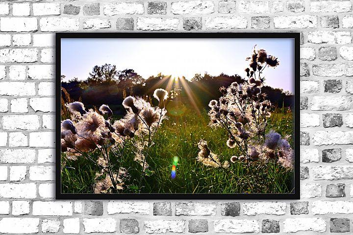 Nature photo, landscape photo, floral photo, fluffy grass