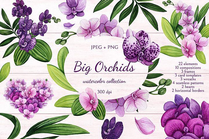 Big Orchids