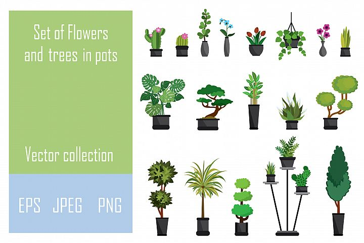 Trees and blooming flowers in pots