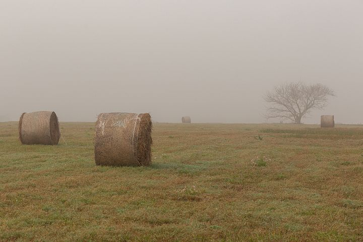 Grass field on a foggy morning