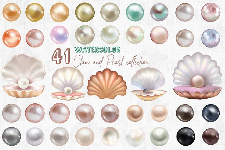 Watercolor clam shell and pearls design elements clip art.